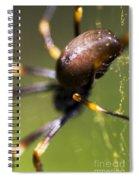 Golden Orb Spider Spiral Notebook