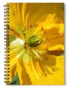 Golden Poppy Expose Spiral Notebook