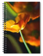 Golden Possibilities... Spiral Notebook