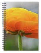 Golden Ranunculus Spiral Notebook