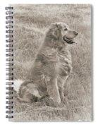 Golden Retriever Dog Sepia Spiral Notebook