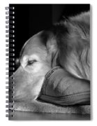 Golden Retriever Dog With Master's Slipper Black And White Spiral Notebook