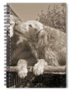 Golden Retriever Dogs The Kiss Sepia Spiral Notebook