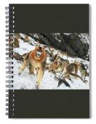 Golden Snub-nosed Monkey Spiral Notebook