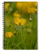 Golden Summer Buttercup 3 Spiral Notebook
