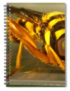 Golden Syrphid Spiral Notebook