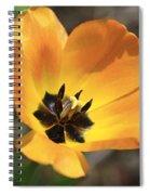 Golden Tulip Petals Spiral Notebook