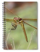 Golden-winged Skimmer Spiral Notebook