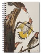 Golden-winged Woodpecker Spiral Notebook