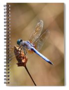 Golden Wings Spiral Notebook