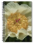 Golden Wings Peony Spiral Notebook