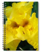 Golden Yellow Iris Flower Garden Irises Flora Art Prints Baslee Troutman Spiral Notebook