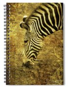 Golden Zebra  Spiral Notebook