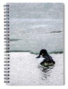 Goldeneye On Ice's Edge Spiral Notebook