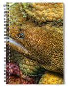 Goldentail Moray Spiral Notebook