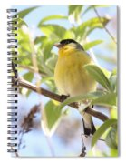 Goldfinch In Spring Tree Spiral Notebook