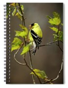 Goldfinch Suspended In Song Spiral Notebook