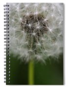 Gone To Seed - Color Spiral Notebook