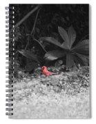 Good Morning Cardinal  Spiral Notebook
