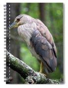 Gorgeous Bird Spiral Notebook