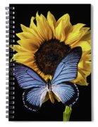 Gorgeous Blue Butterfly Spiral Notebook