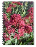 Gorgeous Cluster Of Red Phlox Flowers In A Garden Spiral Notebook