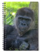 Gorgeous Gorilla Spiral Notebook