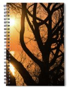 Gorgeous Morning Through The Tree Screen Spiral Notebook