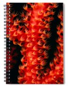 Gorgonian Coral Spiral Notebook