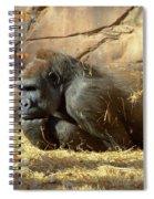 Gorilla Musings Spiral Notebook