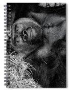 Gorilla Pose Spiral Notebook