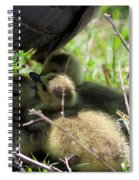 Gosling's In The Shade Spiral Notebook