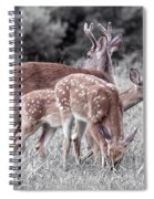 Humor Got Some Doe And Two Bucks Spiral Notebook