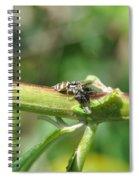 Gotya Spiral Notebook