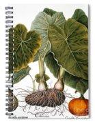 Gourd, Taro, & Pumpkin Spiral Notebook