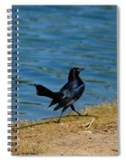 Grackle On The Move Spiral Notebook