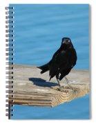 Grackle Spiral Notebook