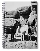 Grand Canyon: Donkeys Spiral Notebook