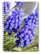 Grape Hyacinth Closeup Spiral Notebook