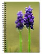 Grape Hyacinth Spiral Notebook