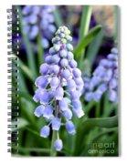 Grape Hyacinths Closeup Spiral Notebook