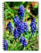 Grape Hyacinths  Spiral Notebook