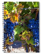 Grapes Ready For Harvest Spiral Notebook