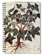Grapevine, 1229 Spiral Notebook