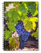 Grapevine With Texture Spiral Notebook