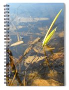 Grass Spears In Still Water Spiral Notebook