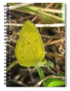 Grass Yellow 01 Spiral Notebook