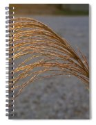 Grassflowers In The Setting Sun Spiral Notebook