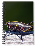 Grasshopper Nymph Spiral Notebook