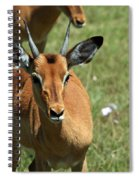 Grassland Deer Spiral Notebook